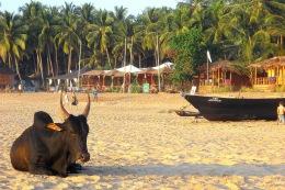 Agonda Beach with Sonho do Mar