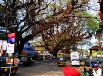 Street in Fort Cochin