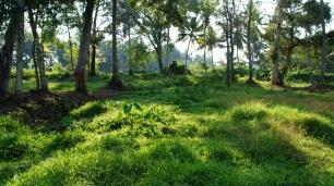 Im Boden der grünen Weiten kreucht so einiges Getier