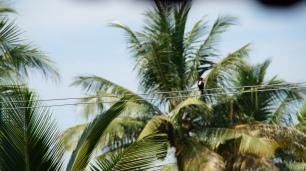 Ein ausgestorbener Vogel okkupiert die Werke menschlicher Zivilisation