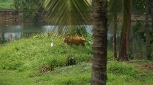 Kranich und Kuh leben hier noch in trauter Verbundenheit
