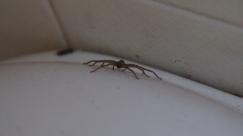 Dieses Spinnen-Baby hält sich bevorzugt an der Toilette auf