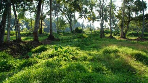 Grüne Wandelwiesen oder die Leinwand meiner Phantasien